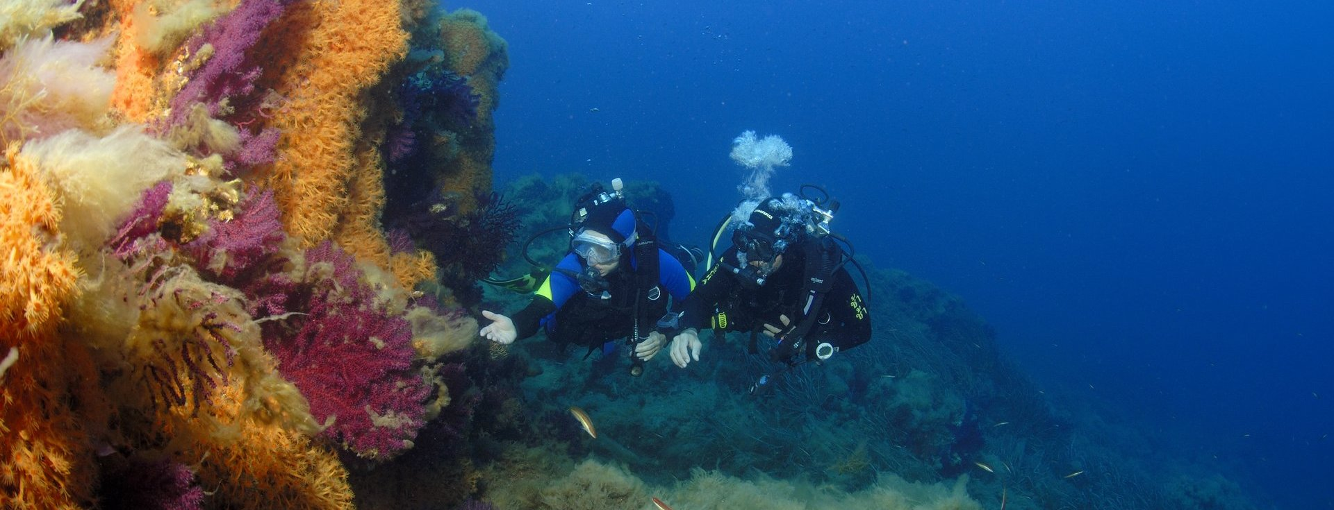 Advanced Dive Courses